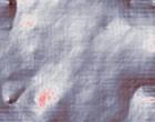 arthrose beim pferd akupunktur leber